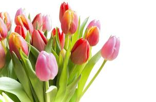 tulipas primavera foto