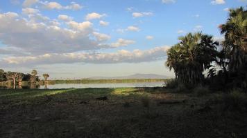 pântano africano foto