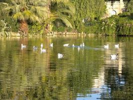 pássaros no parque ciutadella foto