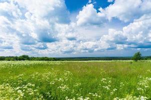 paisagem ensolarada foto
