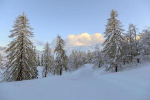 paisagem de inverno