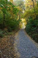paisagem de outono no parque