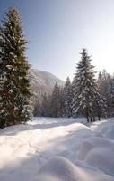 paisagem da floresta de inverno foto