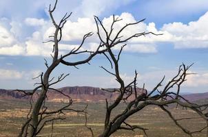 paisagem do deserto de árvore morta