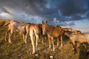 paisagem montanhosa com cavalos pastando foto
