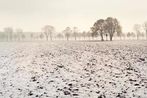 árvores na paisagem de inverno nevoento foto
