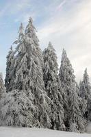paisagem de inverno floresta negra alemanha