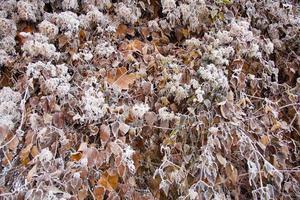clima de inverno foto