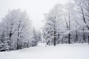 caminho de inverno foto