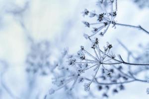 cena de inverno foto