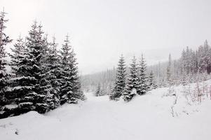paisagem natural da montanha