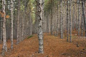 plantação florestal