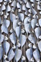 linha de peixe salgado seco sob o sol foto