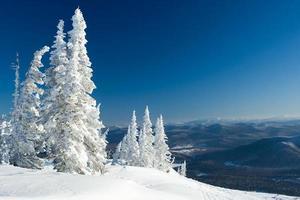 panorama de inverno foto