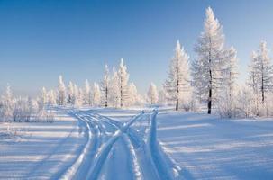 floresta de inverno com estrada foto