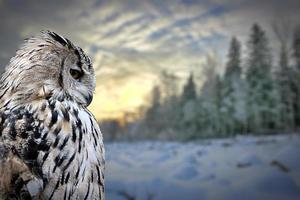 coruja no fundo da floresta de inverno foto
