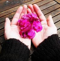 flor de inverno em minhas mãos foto