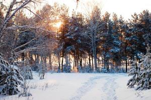 floresta de inverno ao nascer do sol.