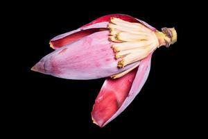 fundo de natureza de flor de banana foto