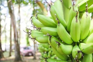 banana crua foto
