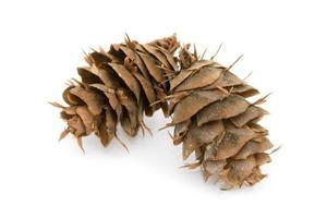 douglas abeto cones foto