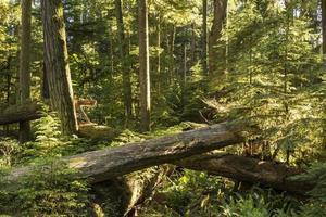 gigantes e mudas no bosque da catedral foto