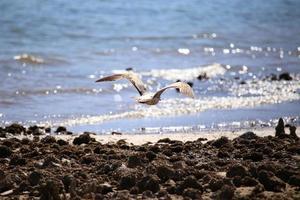 gaivota na praia foto