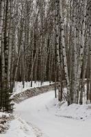 estrada em frente ao lago no inverno