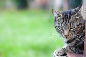 gato ao ar livre