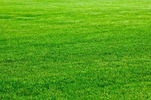 fundo de grama verde foto