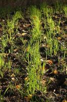 grama da terra foto