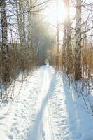 Corrida de ski foto