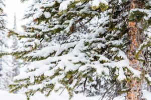 estância de esqui foto