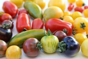 tomates. foto