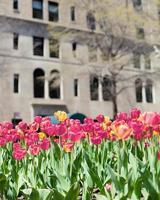 cidade de nova york primavera foto