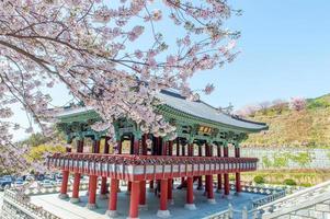 palácio gyeongbokgung com flor de cerejeira na primavera, foto