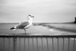 gaivota de Coney Island foto