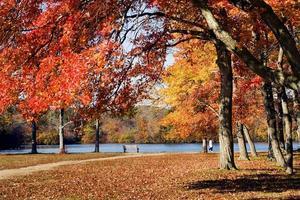 tiro à distância de uma pessoa caminhando em um parque no outono