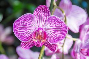 orquídea rosa no show de orquídeas, jardim botânico de nova york foto