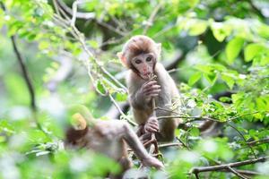 macaco bebê na colina dourada, hong kong foto