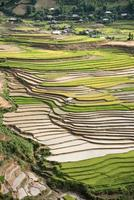 mais bonito terraço de arroz em tule, mu cang chai, vietnã foto