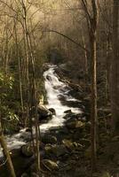 cascatas do pino do acampamento de Lynn