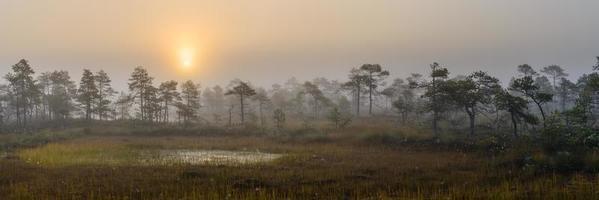 de manhã cedo no pântano