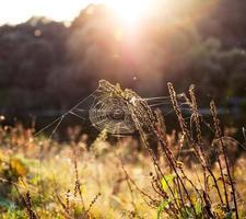 lindo pôr do sol foto