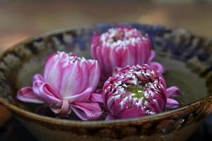lótus rosa foto