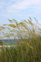 praia de jacksonville, flórida foto