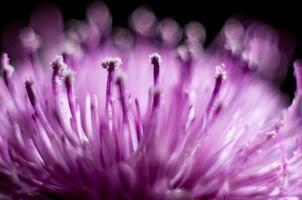 Flor rosa foto