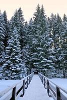 atravessar na floresta de inverno