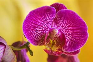 flor da orquídea foto