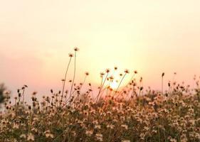 flores da grama foto